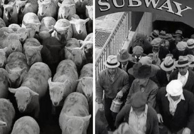 Montage parallèle ou alterné?